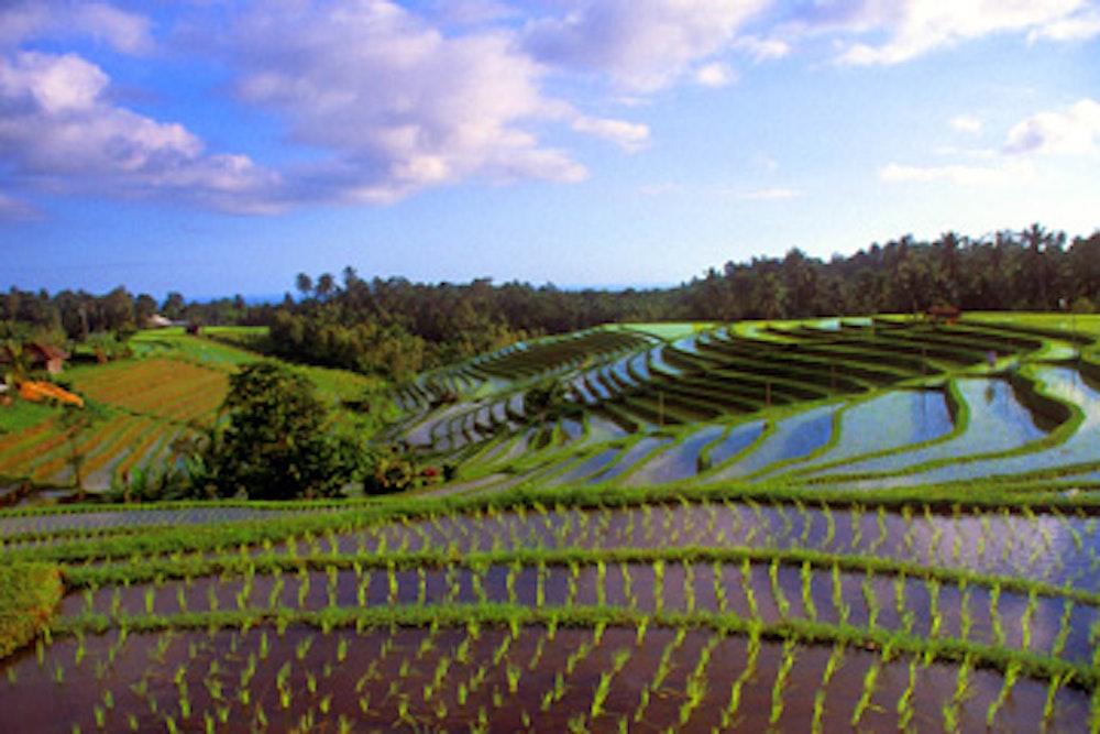 Bali And Beyond Adventure