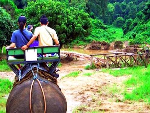 Bangkok And Chiang Mai Elephants